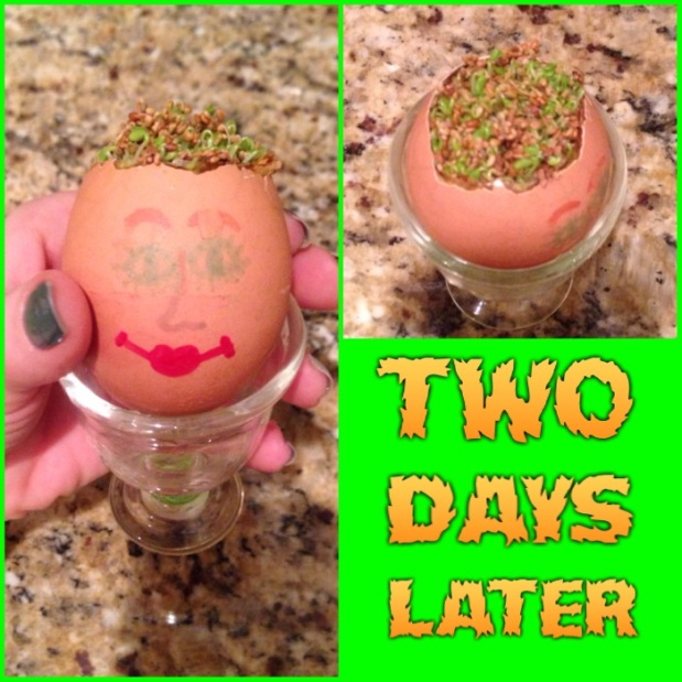making your own egghead with kids homeschool project organic sprouts